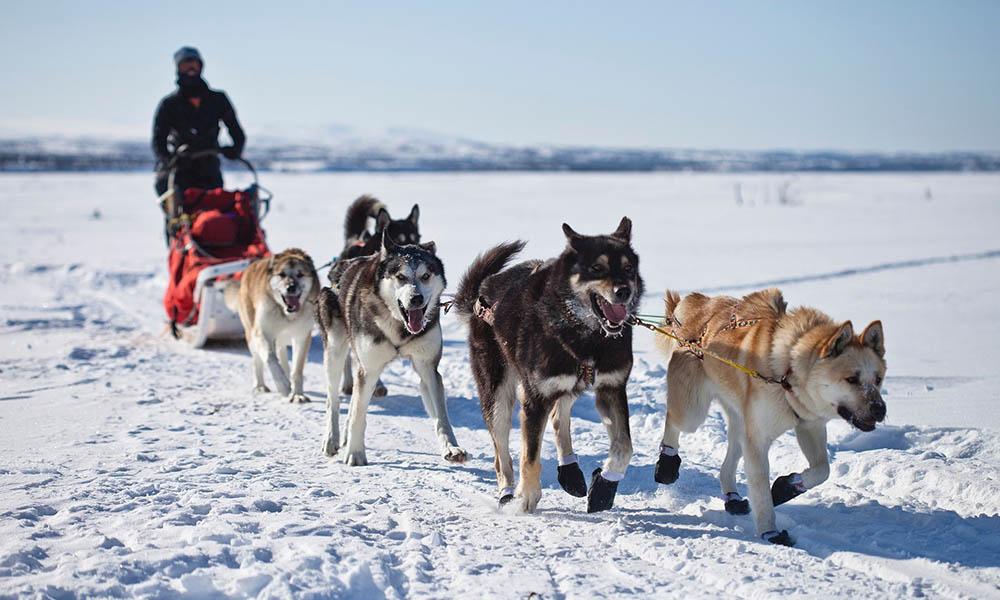 mt bachelor dog sledding
