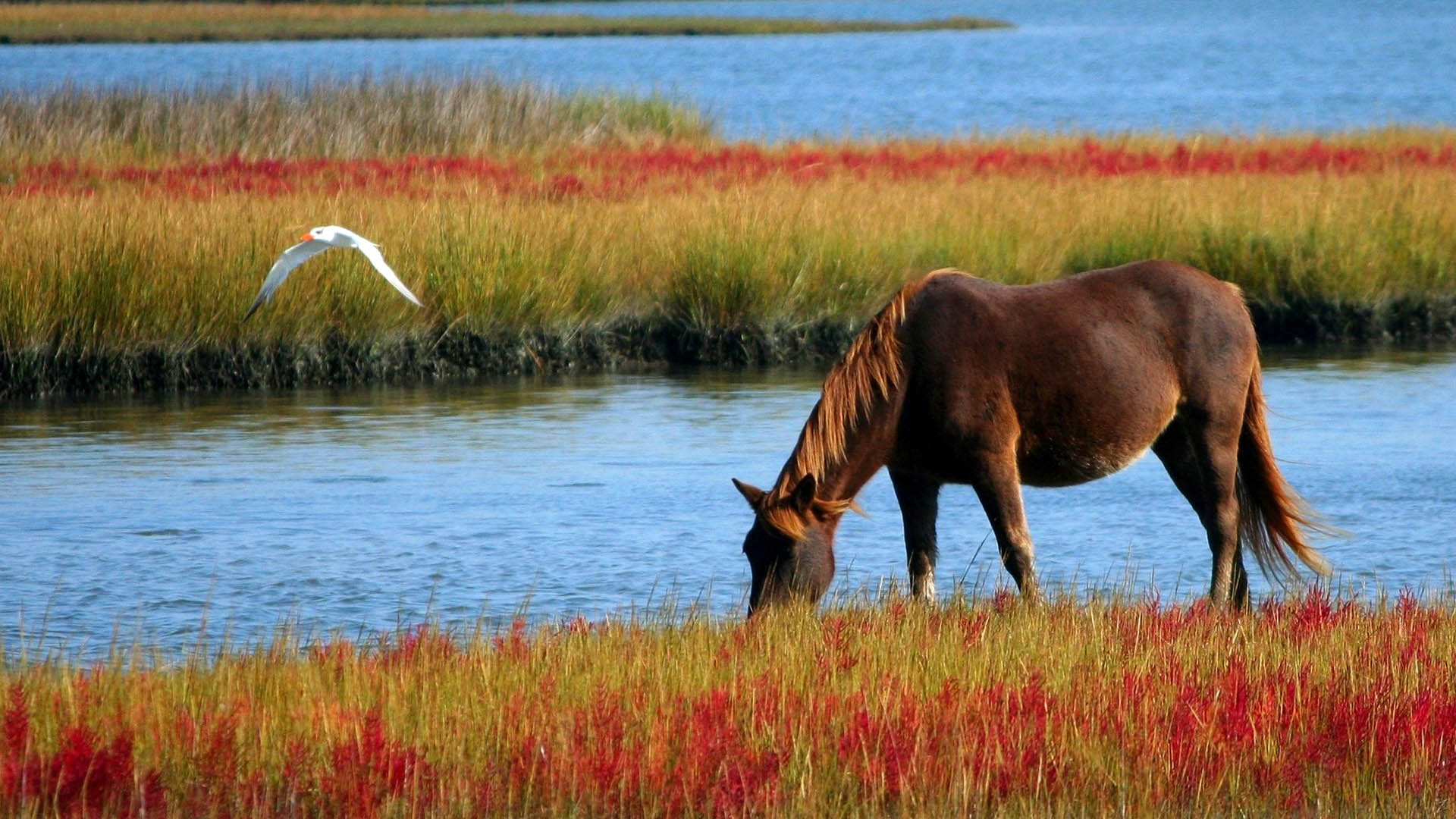 horseback riding in Sunriver