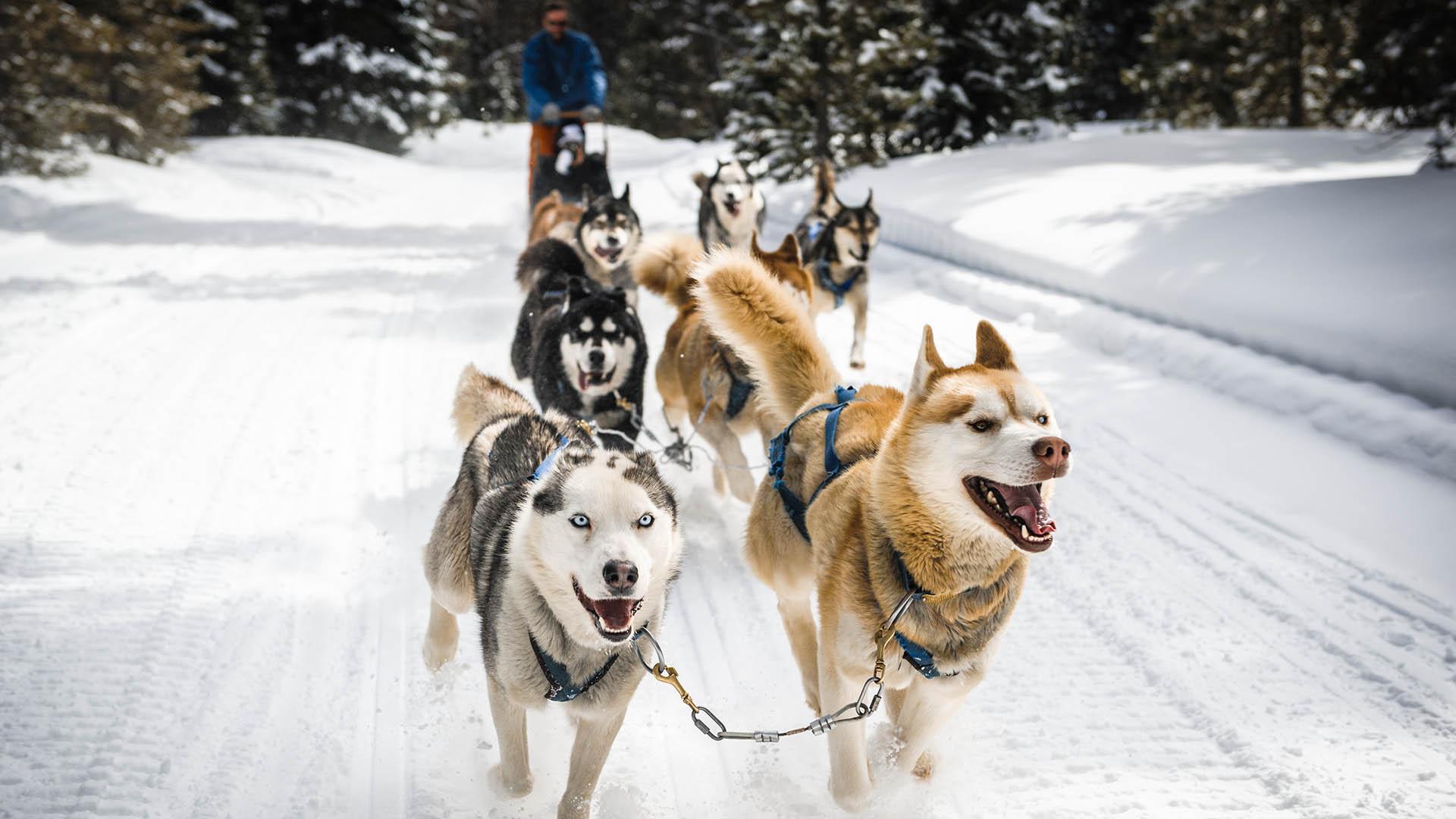 things to do in Sunriver - dog sledding